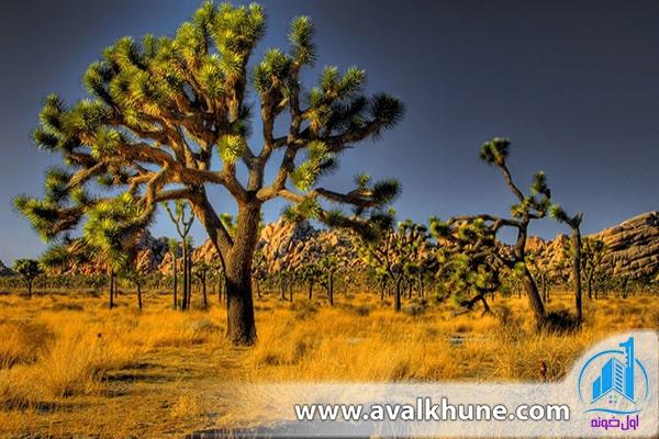 پارک ملی Joshua Tree؛ آمریکا