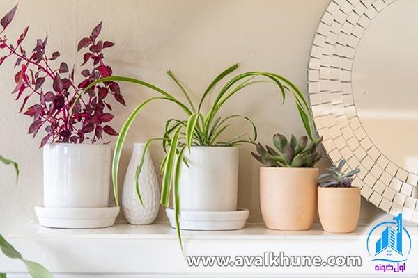انواع گل و گیاه در لوازم تزئینی برای دکوراسیون