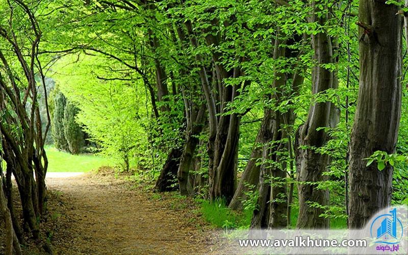 جنگل سیسنگان نوشهر