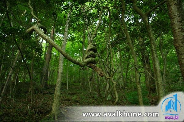 جنگلهای آئوکیگاهارا؛ ژاپن
