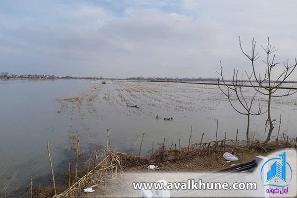 نگاهی به شرایط زیستگاه و انواع پرندگان مهاجر در تالاب سرخرود