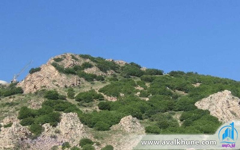 منطقه محافظت شده و شکار ممنوع سیاه بیشه